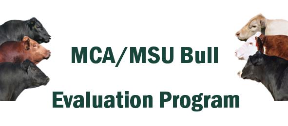 MCA/MSU Bull Evaluation Program