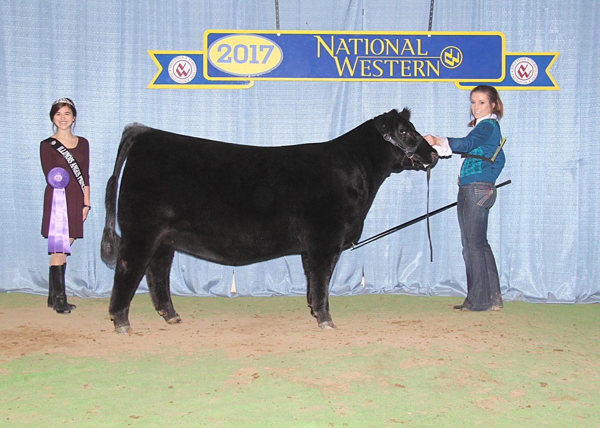 Senior Heifer Calf Champion